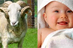 Обряд жертвоприношения за новорожденного ребёнка